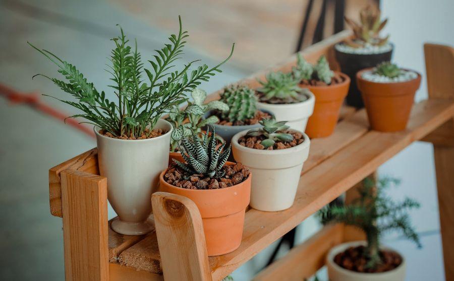Energiaszintet emelő növények