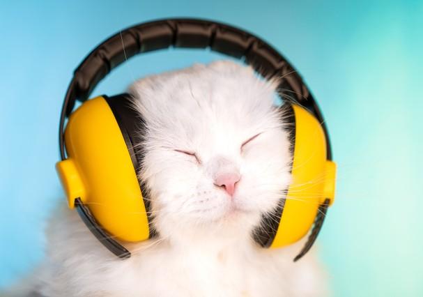 pets-playlist_1