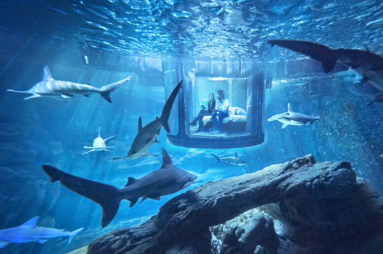 dormire-tra-gli-squali-nell-acquario-di-parigi-con-airbnb