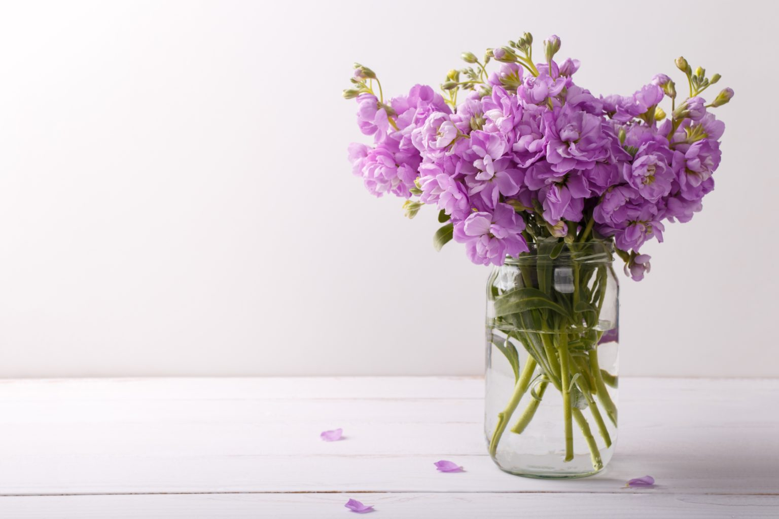 Bouquet of lilac matthiola flowers in vase on white wooden background